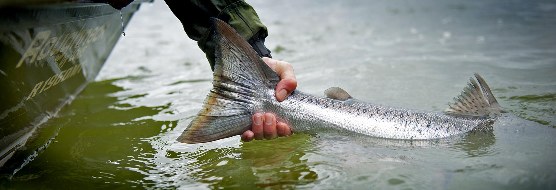Alaska king salmon fishing crystal creek lodge for King salmon fishing alaska