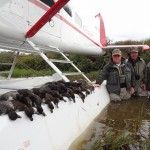 Alaskan Duck Limit