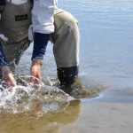 Releasing a Dolly Varden on Three Creek