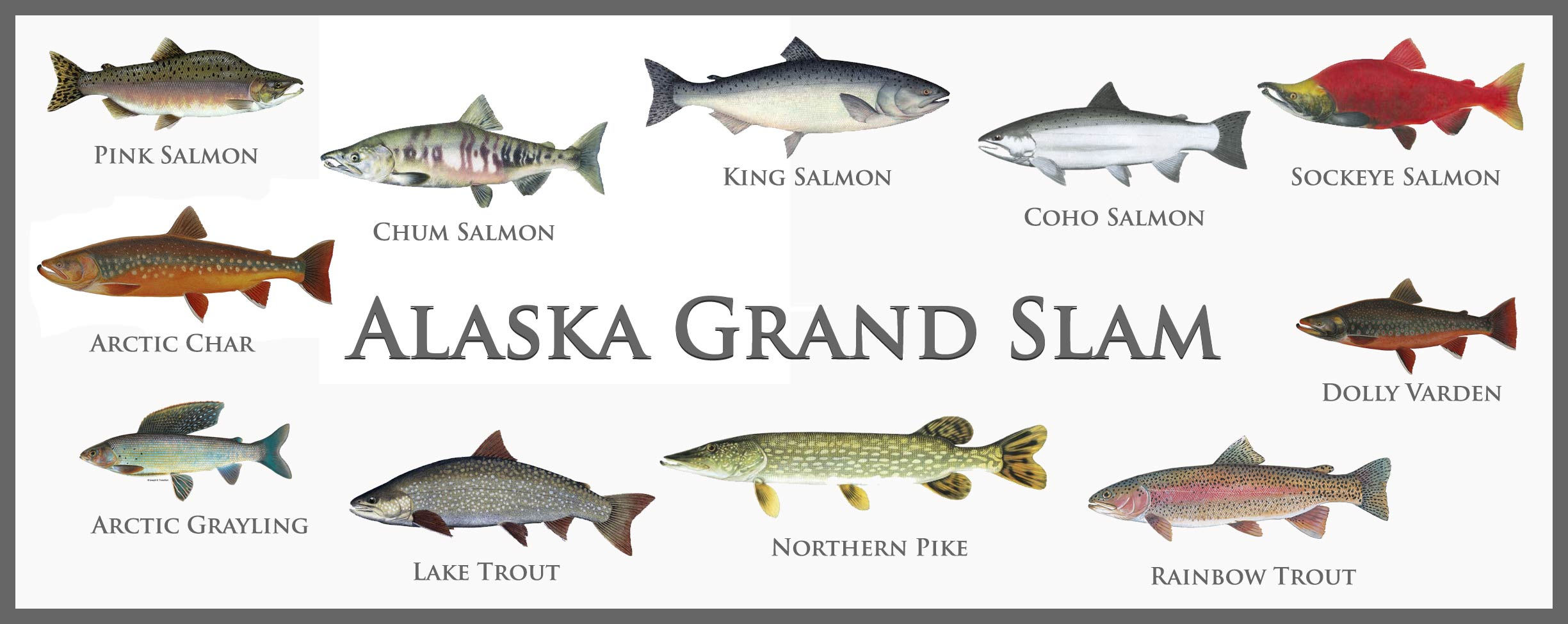 The ccl blog crystal creek lodge for Grand slam fishing